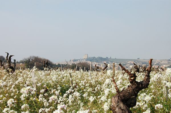 Le vignoble de l'AOC Châteauneuf-du-Pape - Printemps 2017