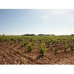 VIGNOBLE CHATEAUNEUF